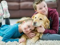Pets… and Clean Carpets, Too!